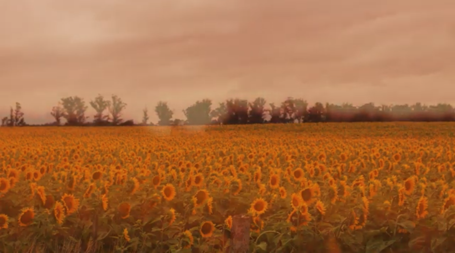 Nuevo Video: GIRASOLES